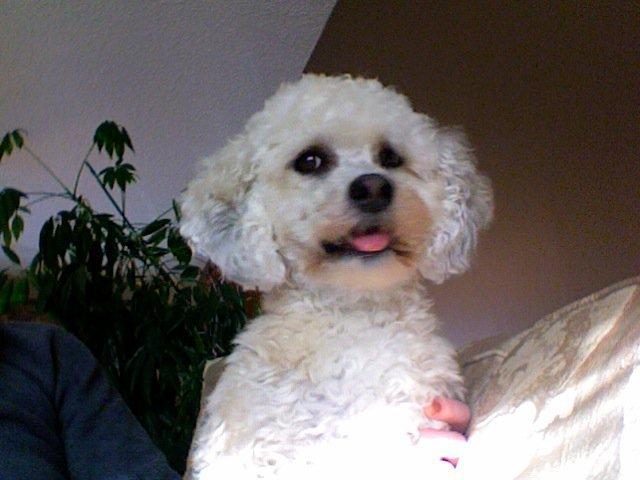 My dog - 2 of 3