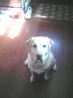 Dogdog