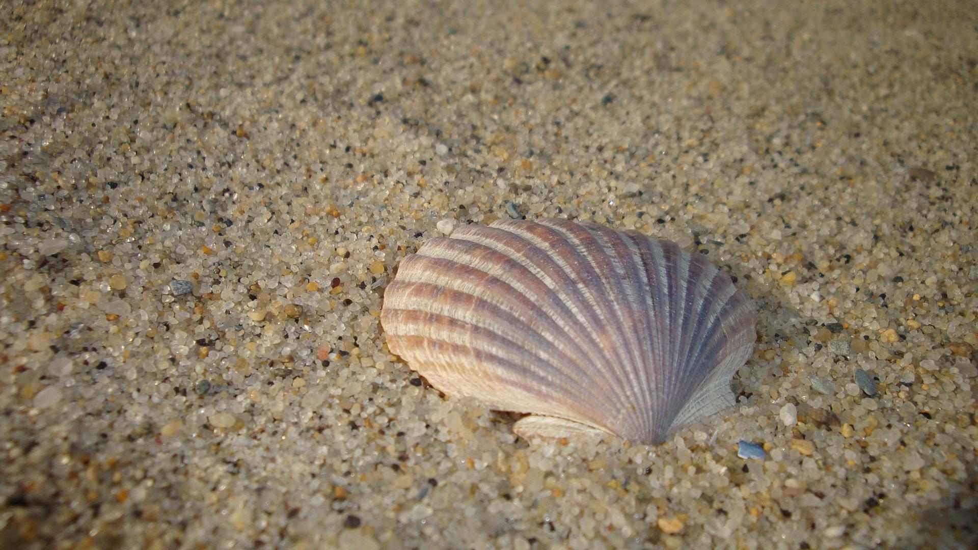 Artistic shot of seashell