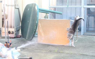 Catty mc cat cat