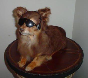 Doggyy
