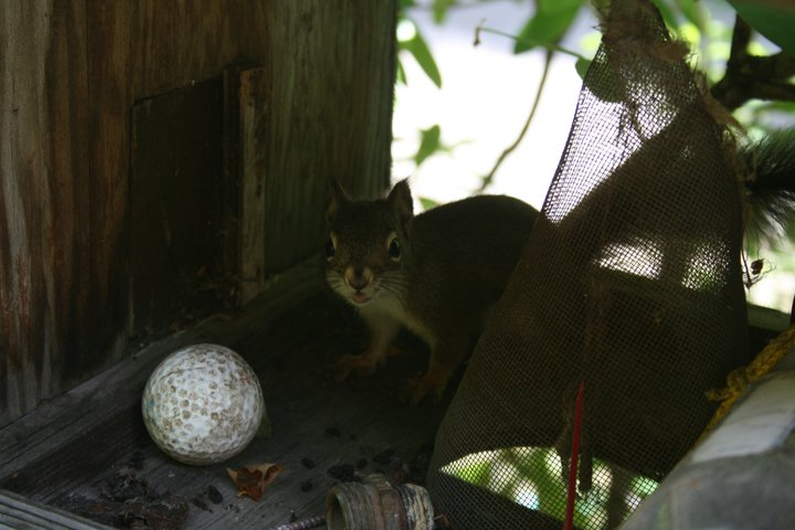 Cute little thing lives in a bird house on my deck