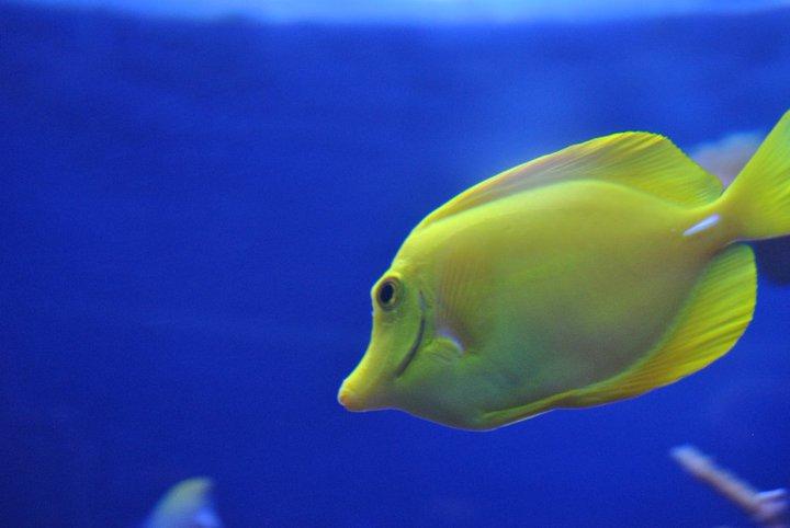 Fishyyy