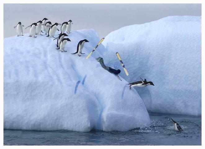 Dan is still a penguin