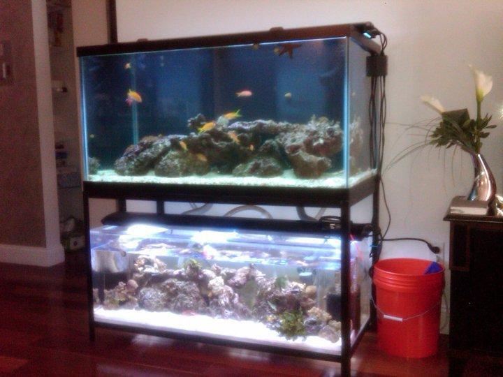 200 gallon saltwater aquarium with custom refugium