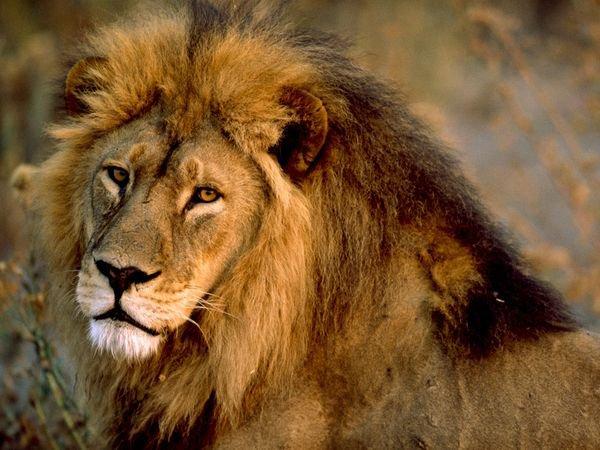 Lionson