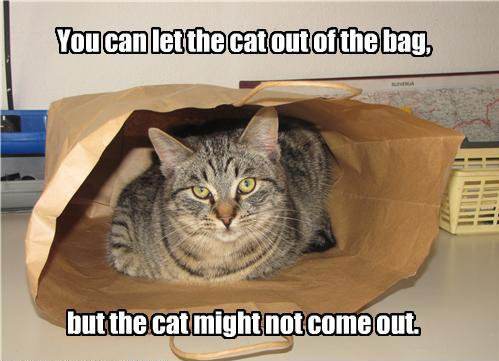 funny-pictures-you-can-let-the-cat-out-of-the-bag.jpg