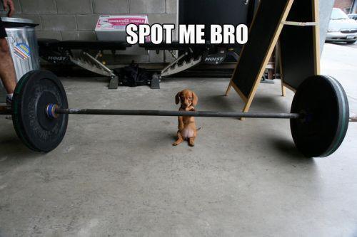 spot me brah