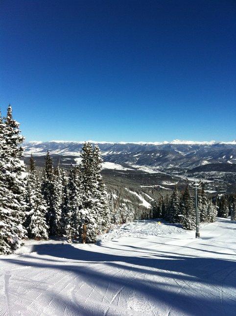 Blue Bird Breck