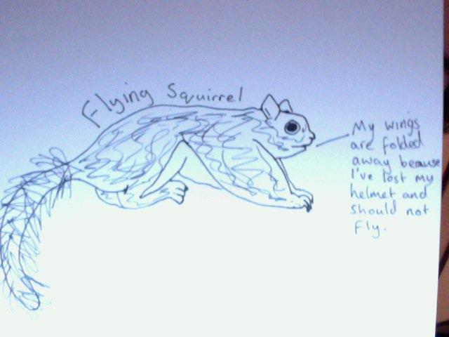 flying squirrel forgot his helmet