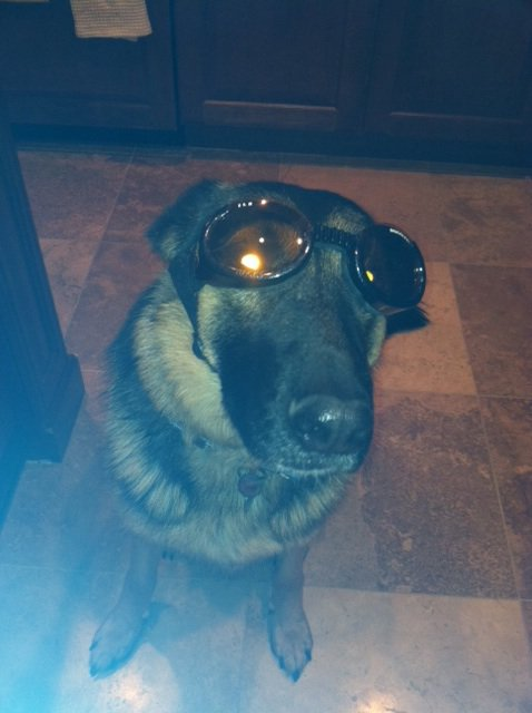 Zeke chillin wit his doggles