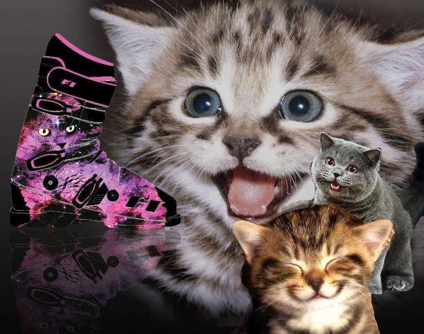 Full Tilt Cats