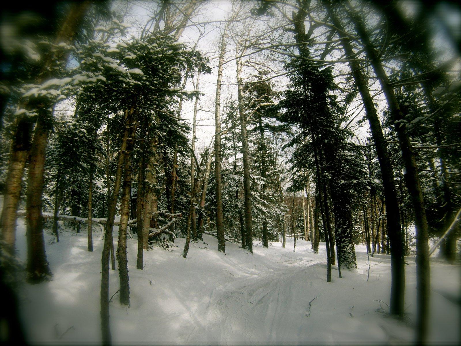 mount snow trees