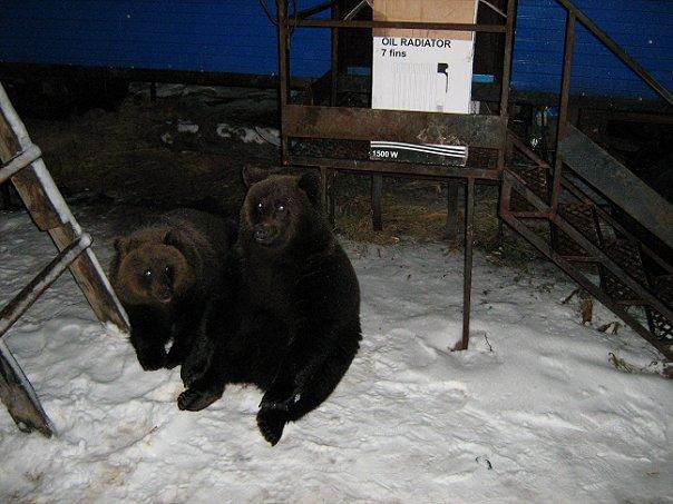 My home bears