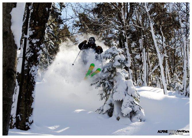 VT Trees with Alpine-Live