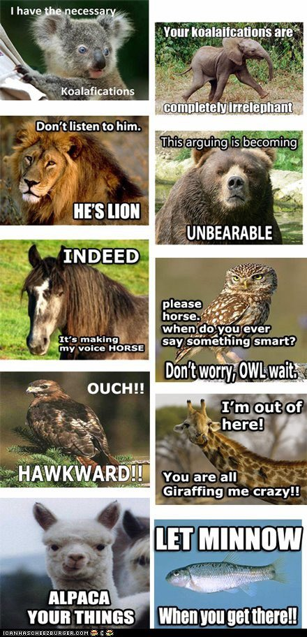 funny-pictures-animal-capshunz-a-wild-fight1[1].jpg