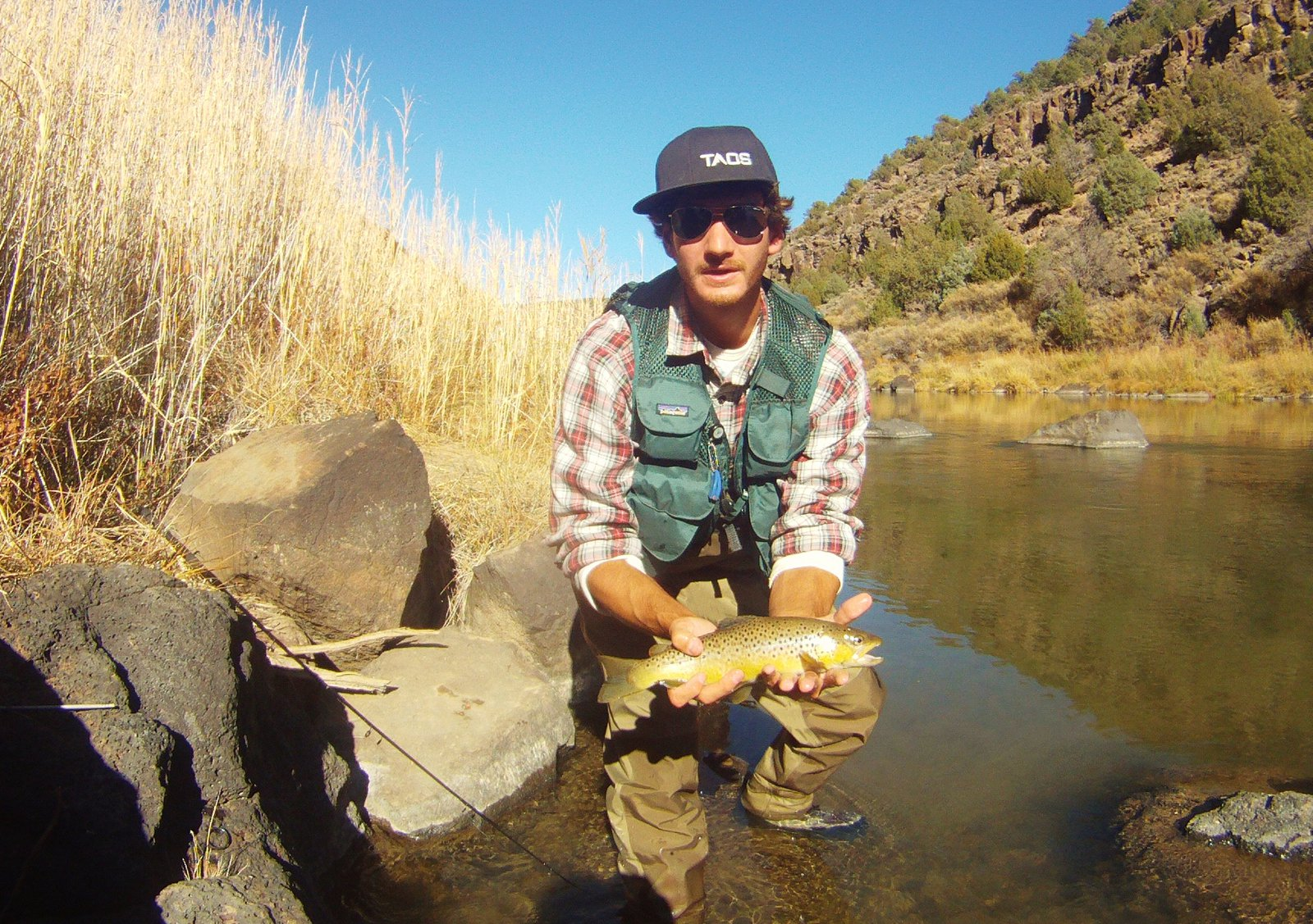 Brown trout in the Rio Grande