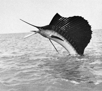 Hesherfish