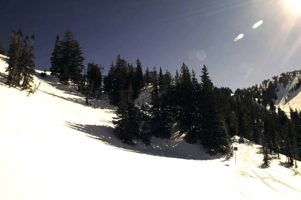 Alta Pines