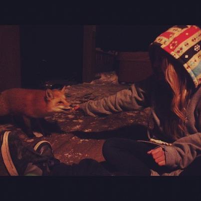 Feeding a fox