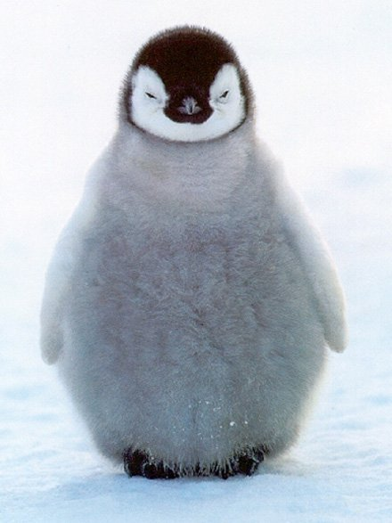 penguin.jpeg