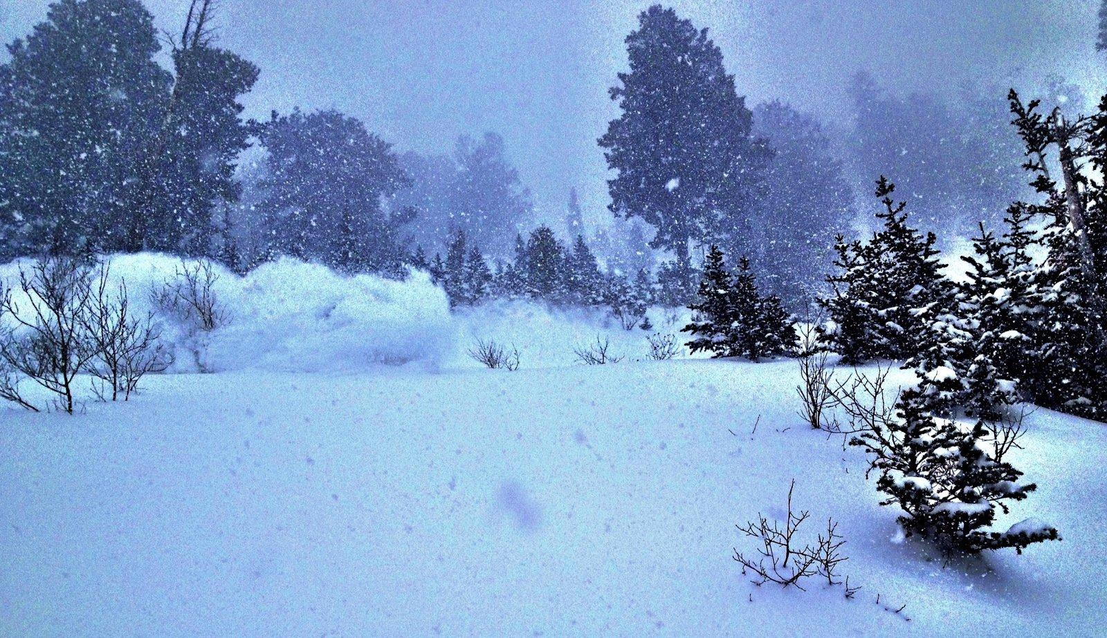 Snowsnake slashing