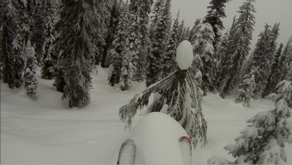 Tree Launching