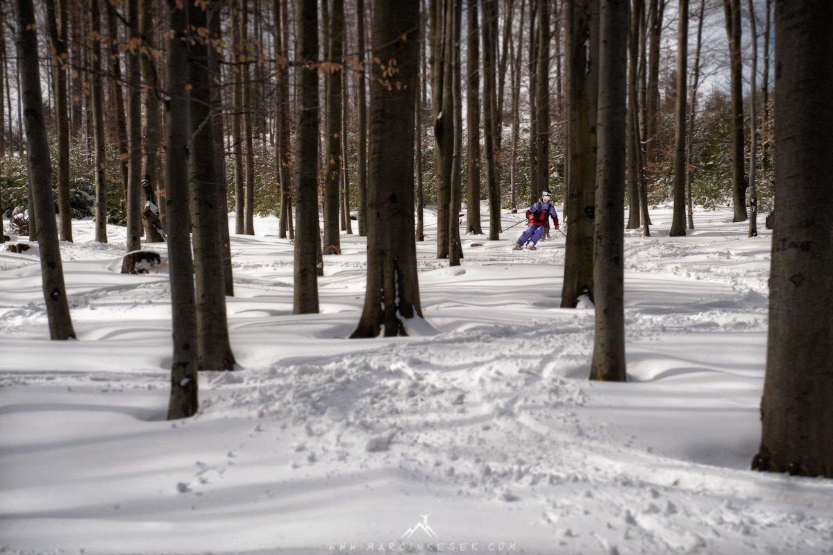 Treeride