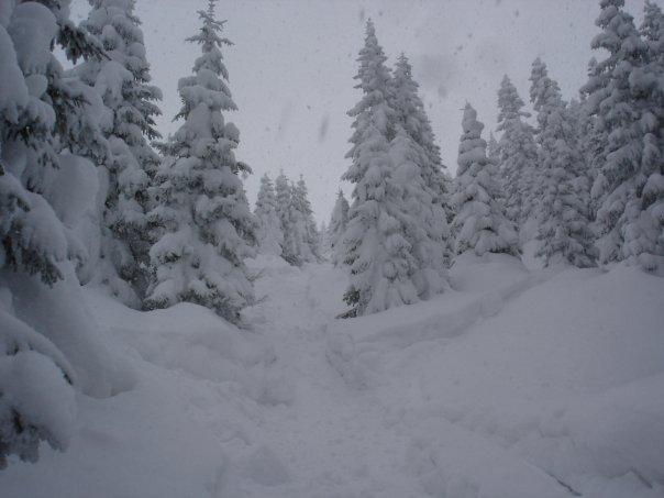 powder run in the trees