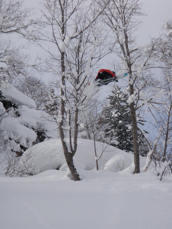 Tree Gap