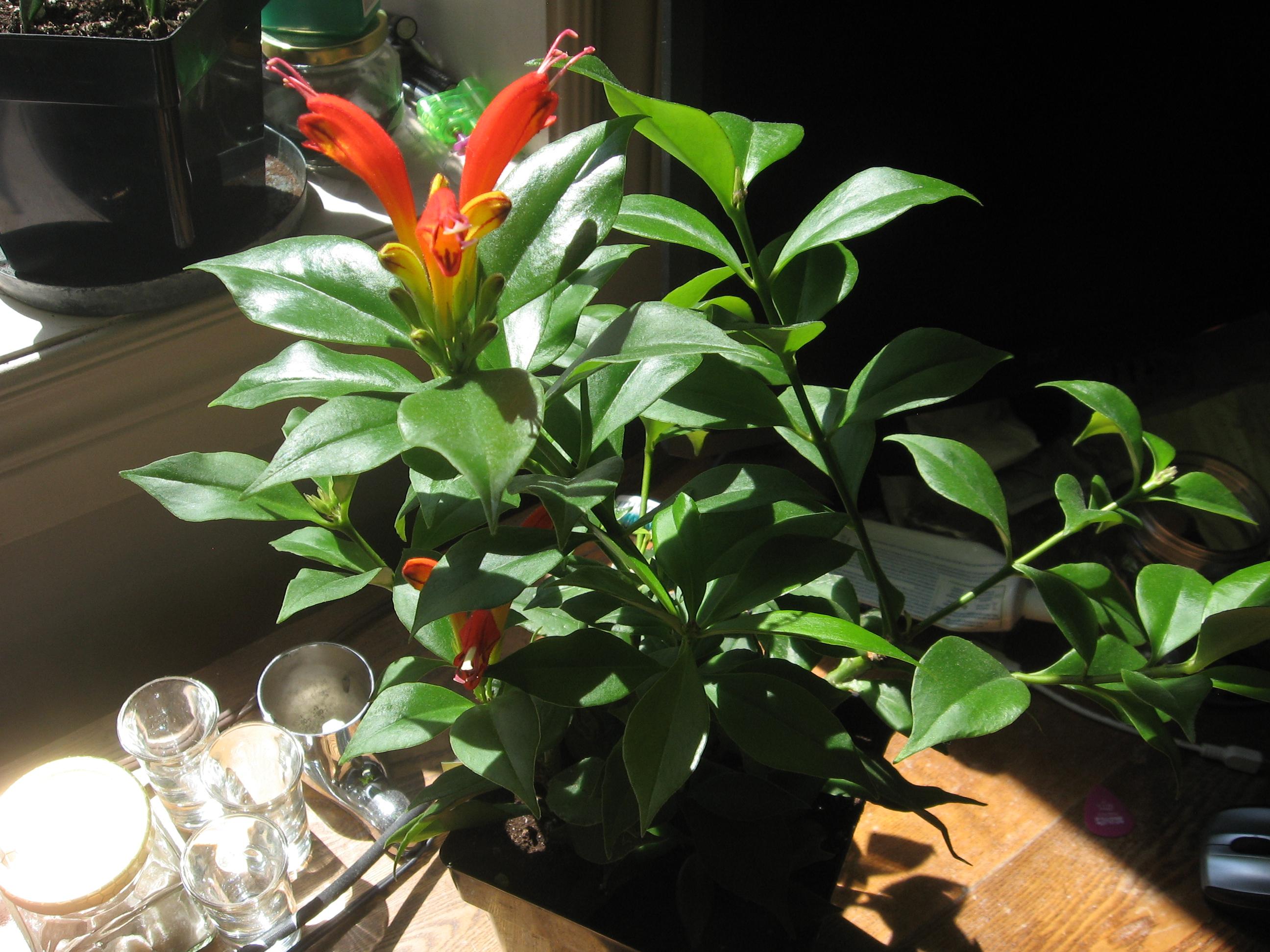 show me your house plants non ski gabber. Black Bedroom Furniture Sets. Home Design Ideas