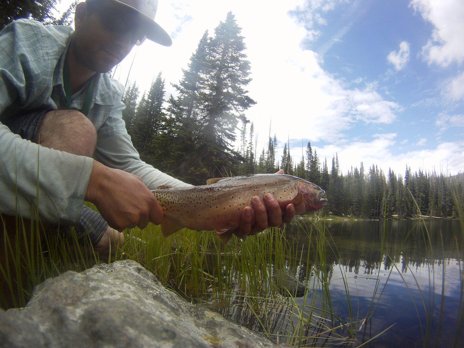 Colorado River Cutthroat