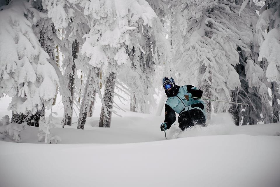 Mellow tree skiing