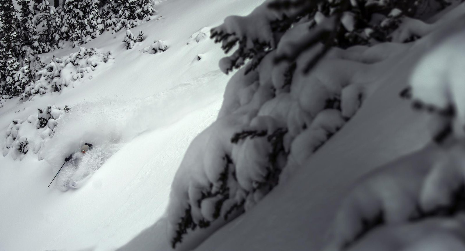 Bo getting pitted at Alta 10/30
