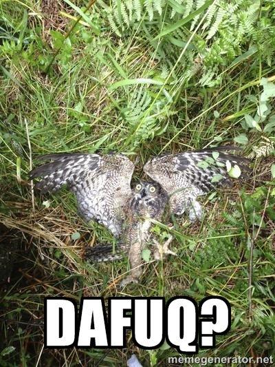 DAFUQ OWL