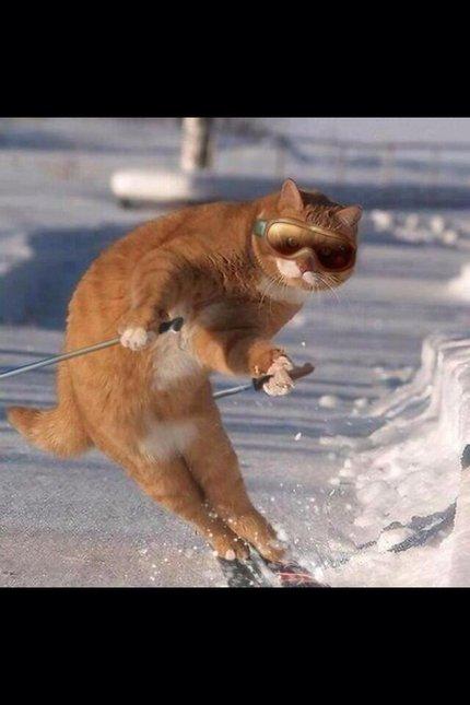 1 cat ski.jpg-large