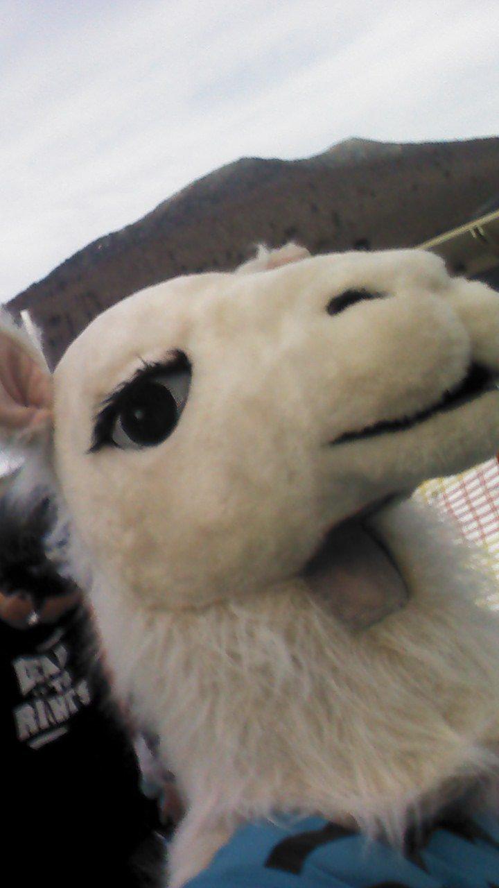 Llama Selfies