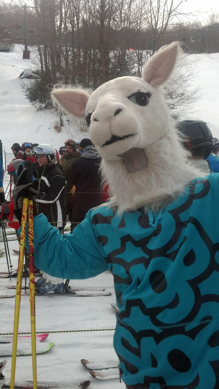 Reppin the Llama