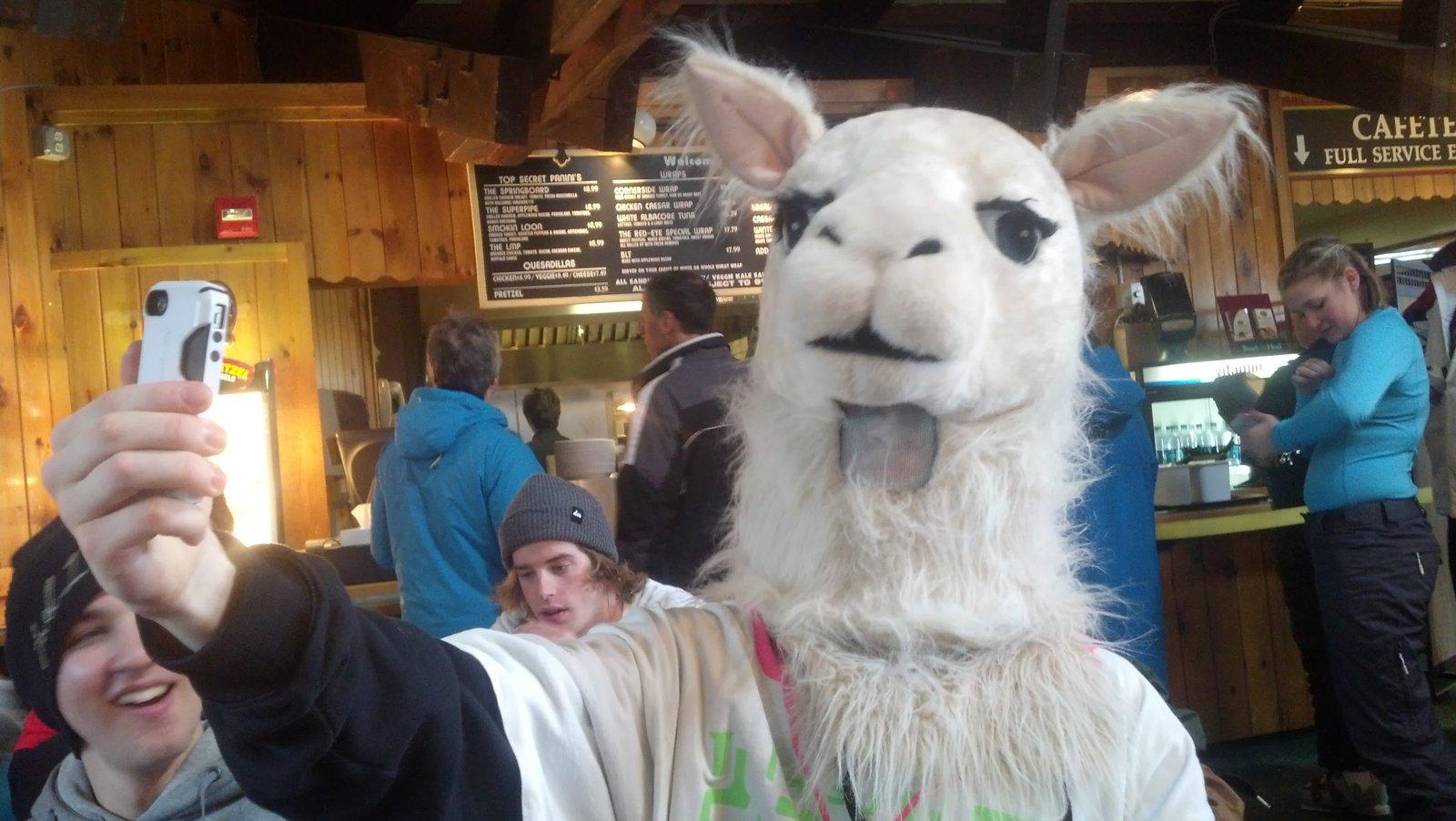 Llama taking a selfie
