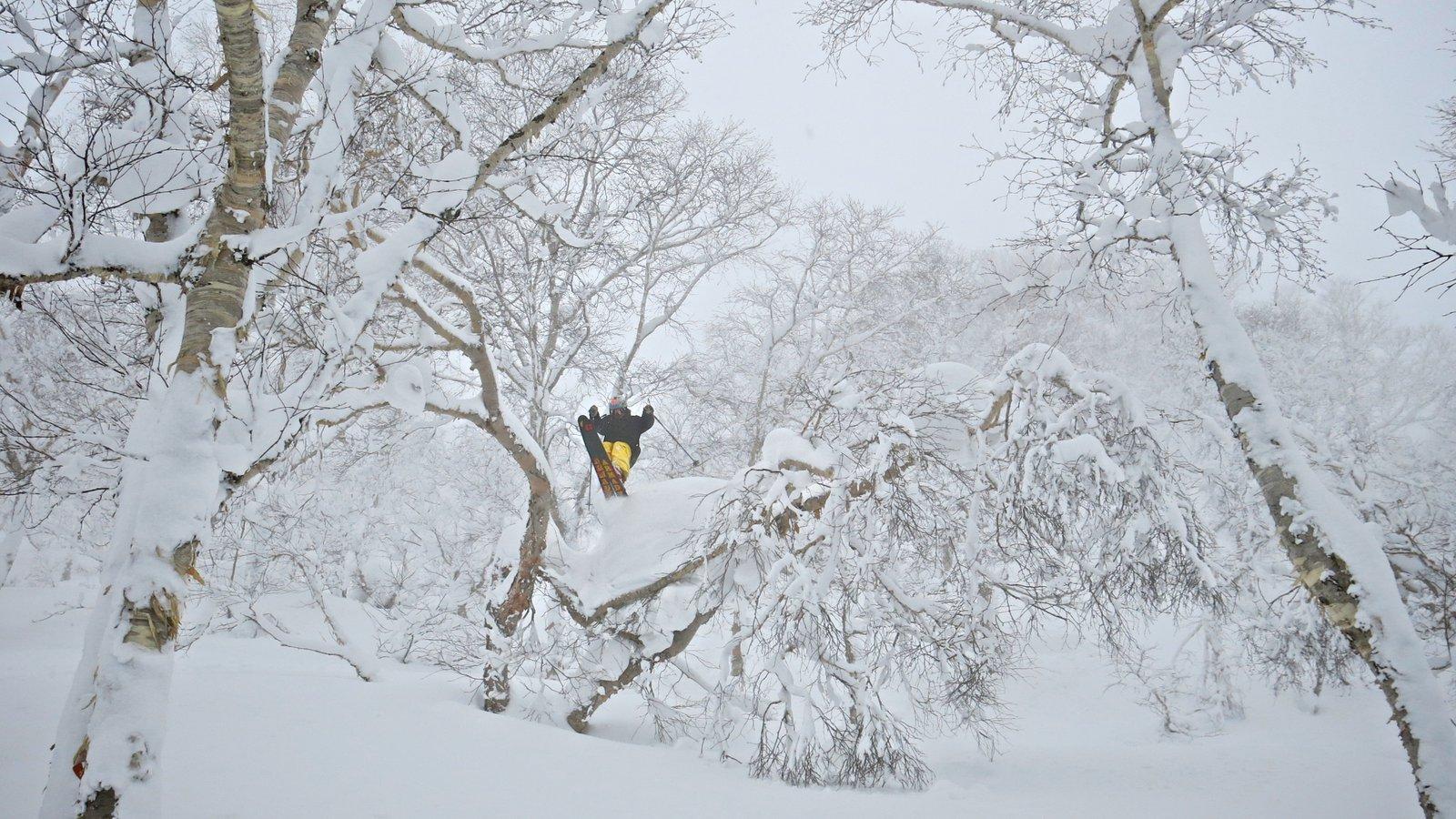 Tree Jibbin in Japan