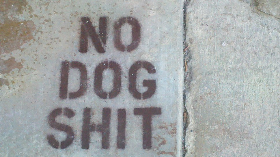 no dog shit