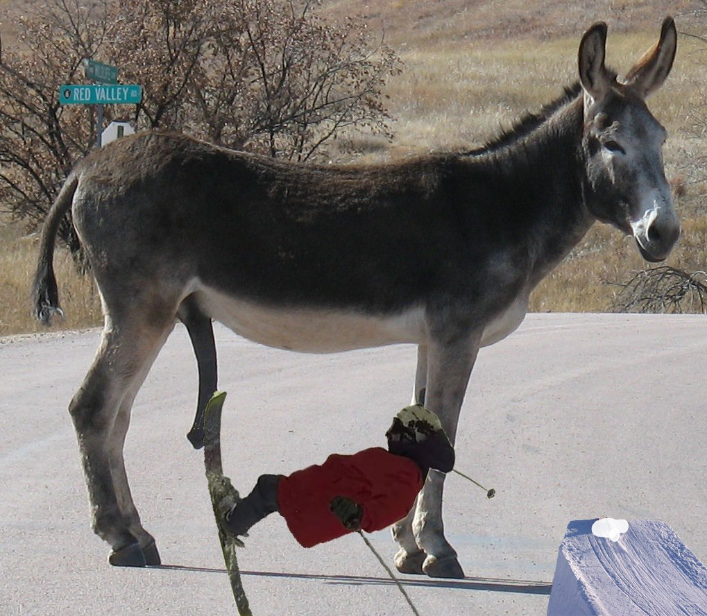 tapping donkey dicks