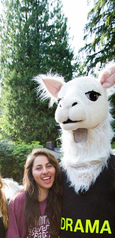 Chillin with the drama llama