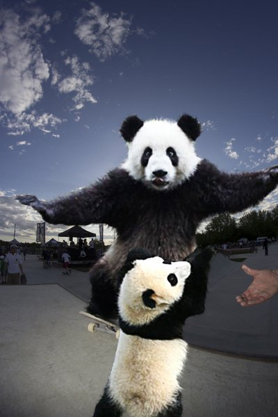 Panda Sk8