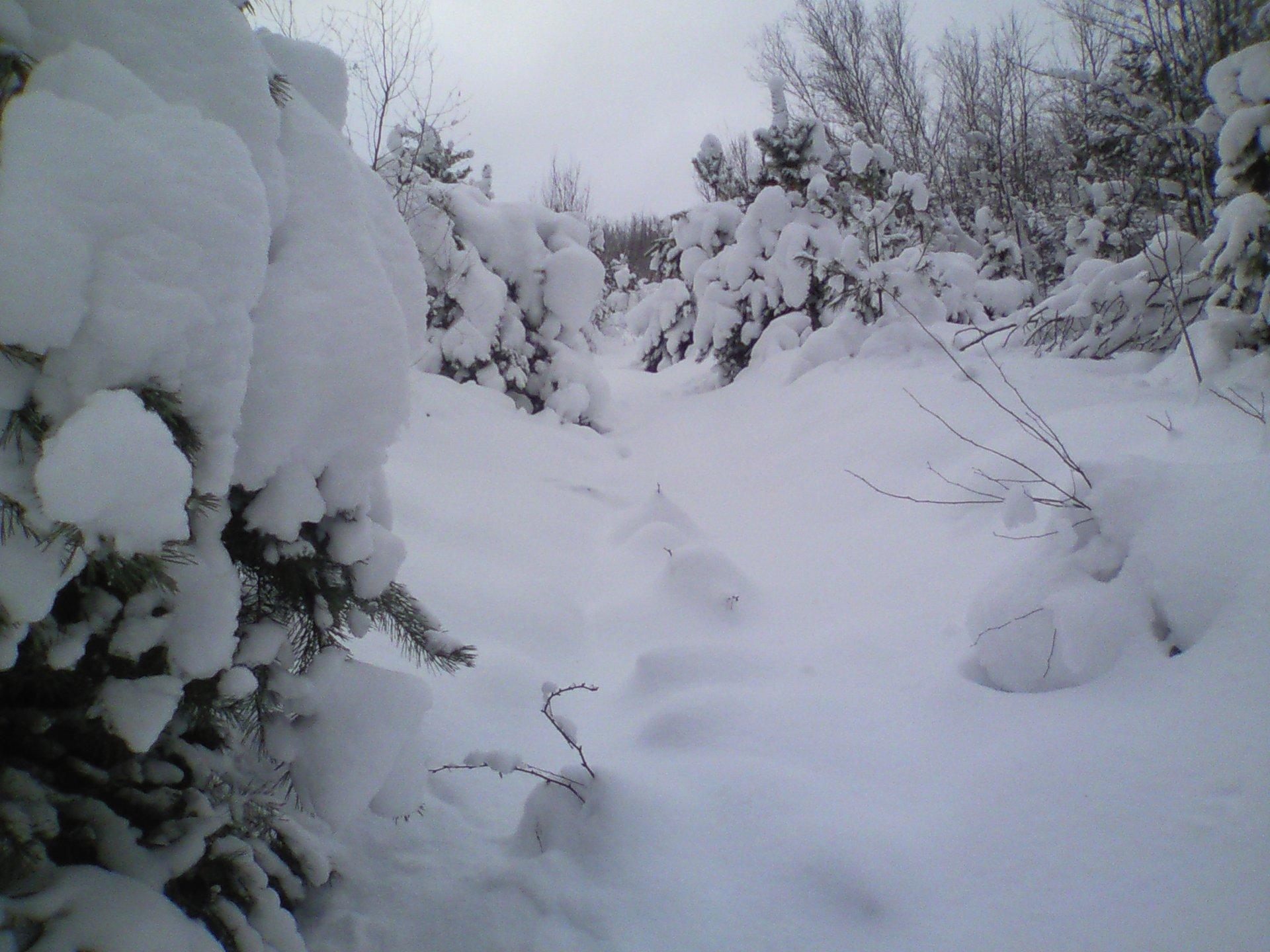 Snowbowl!