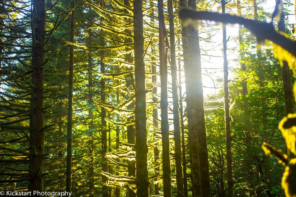 Mt. Hood Nation Forest