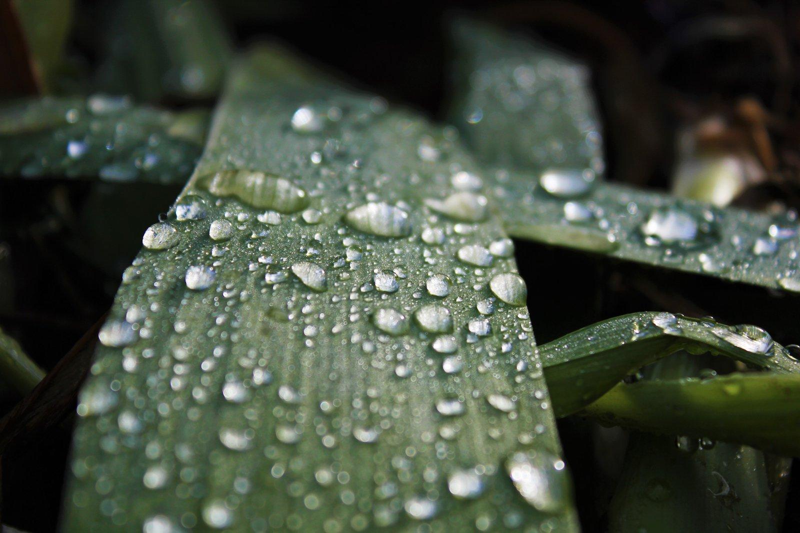 watery glass blade