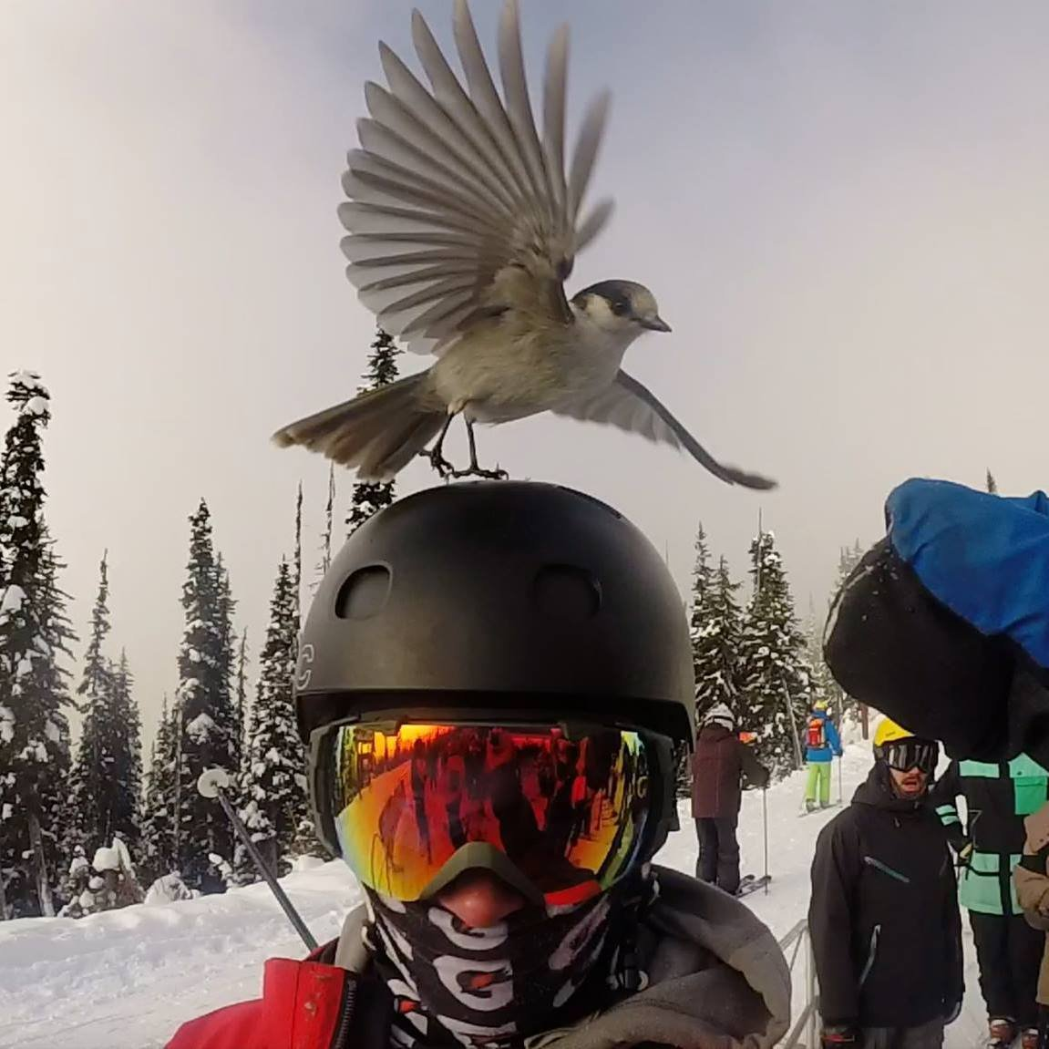 Bringing the Bird Back