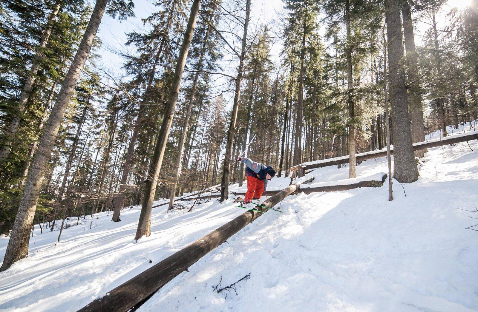 tree slide.
