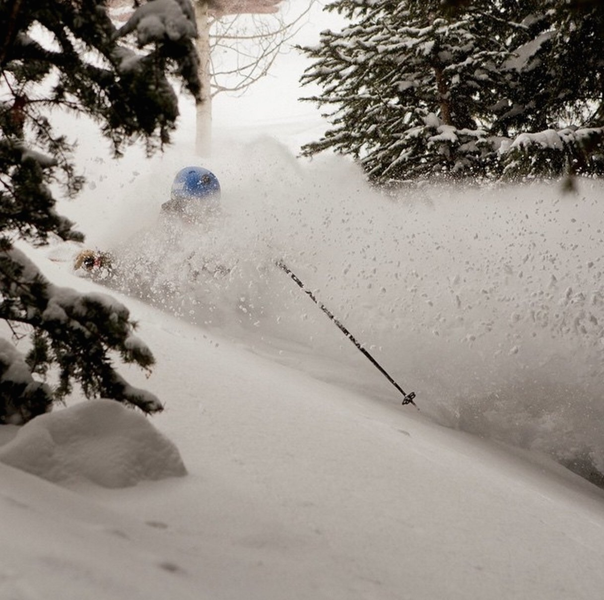 Powder in Telluride